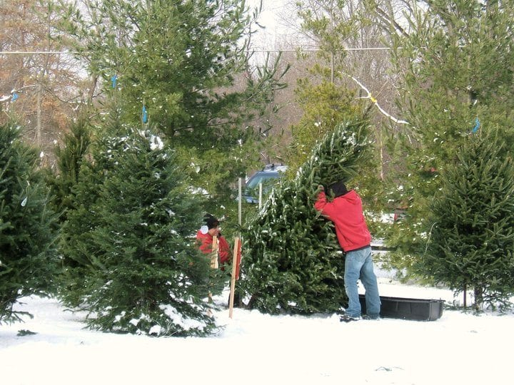 The Best Places To Get A Christmas Tree In Columbus