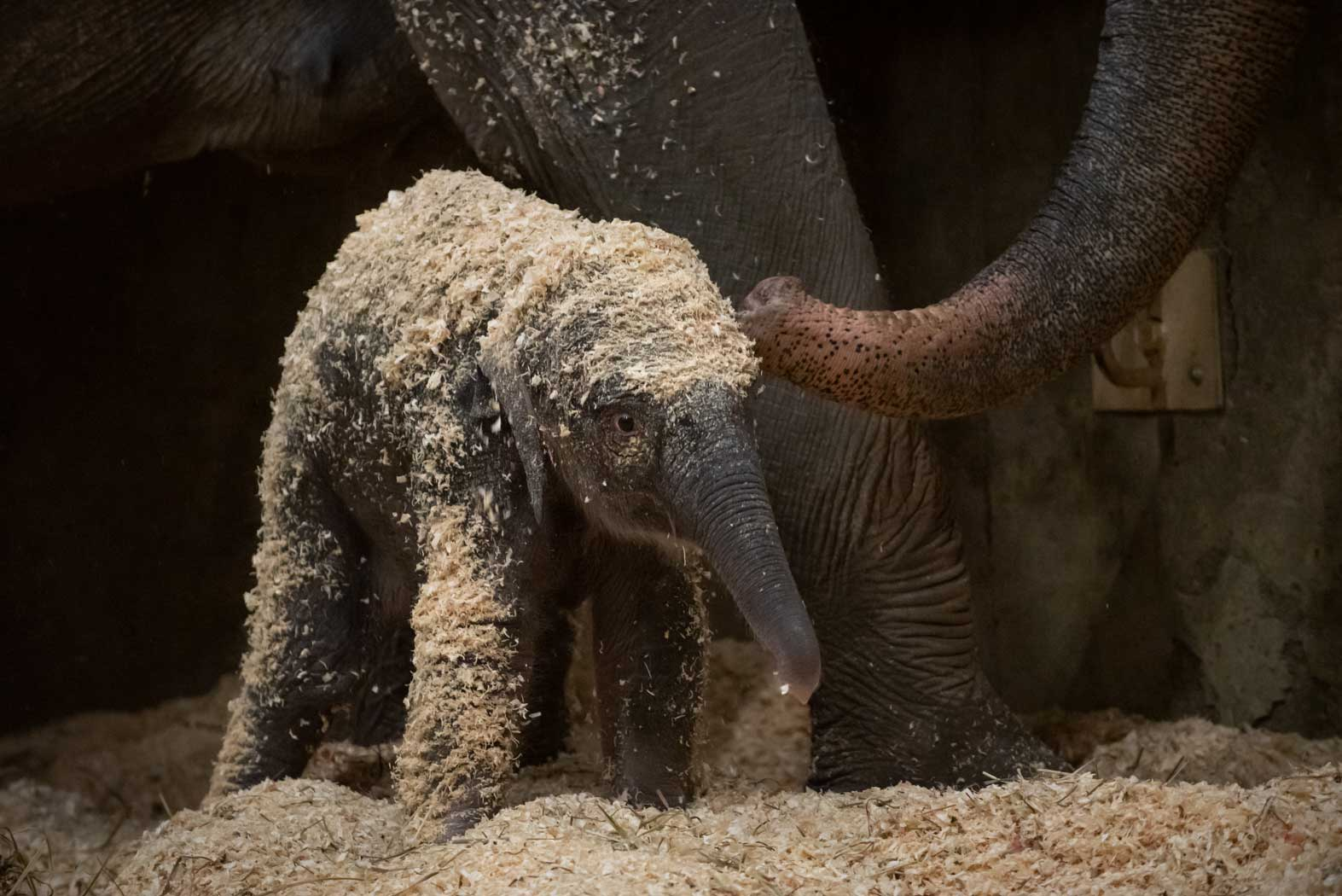 The Zoo Welcomed An Adorable Baby Elephant And It S The