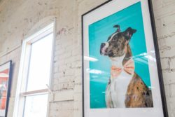These Adorable Shelter Dogs Have Become Works Of Art At North Market